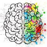 Gehirn links Logik rechts Kreativität